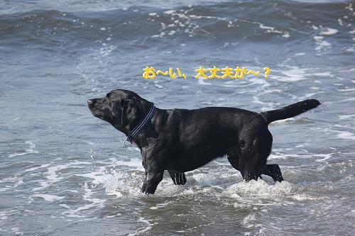 s-IMG_0528_20110623165746.jpg