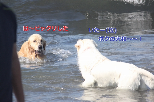 s-IMG_0535.jpg