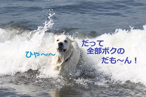 s-IMG_0542.jpg