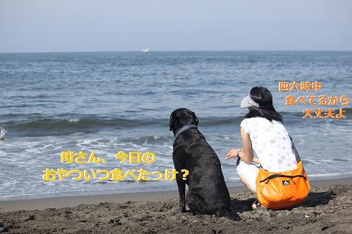 s-IMG_0574_20110623170025.jpg