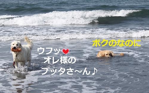 s-IMG_0704.jpg