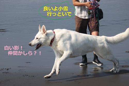 s-IMG_0778_20110701165946.jpg