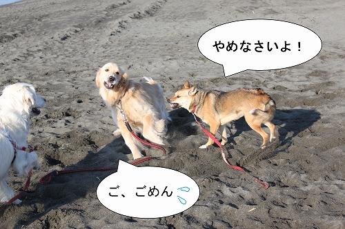 s-IMG_0848_20110126190701.jpg