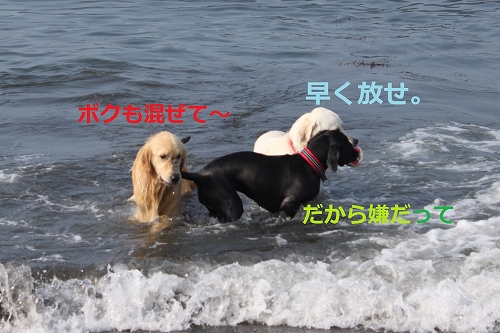 s-IMG_0925_20110704215339.jpg