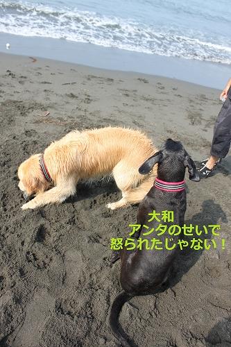 s-IMG_0935_20110704215557.jpg