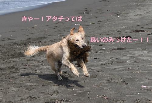 s-IMG_0979_20110707110325.jpg