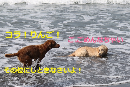 s-IMG_0988_20110707110503.jpg