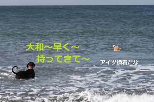 s-IMG_1149_20110724213816.jpg