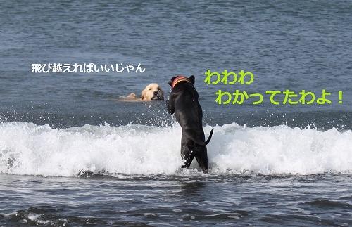 s-IMG_1153_20110724213812.jpg