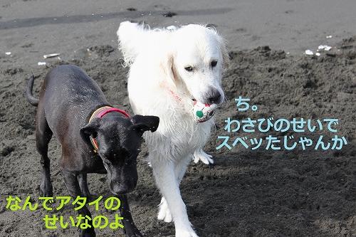 s-IMG_1164_20110724213951.jpg