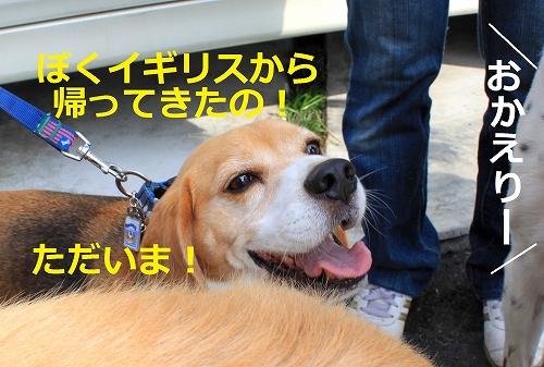 s-IMG_1190_20110726224139.jpg