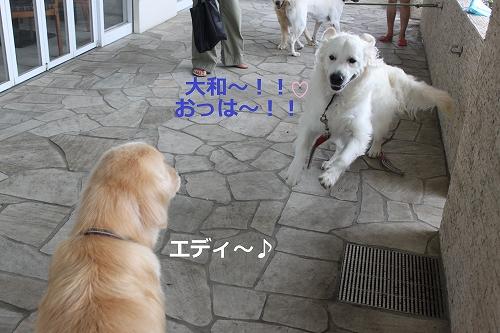 s-IMG_1209_20110729221321.jpg