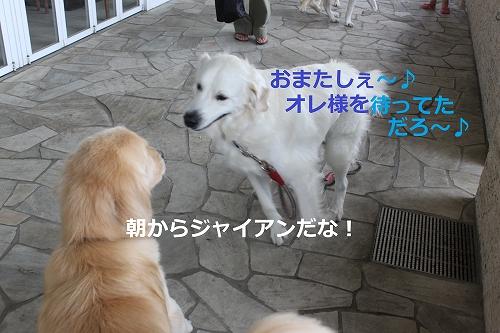s-IMG_1210_20110729221320.jpg