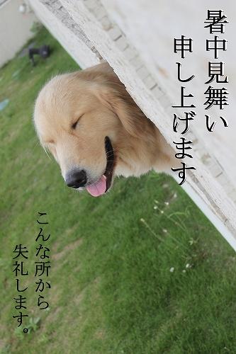 s-IMG_1225_20110729221446.jpg