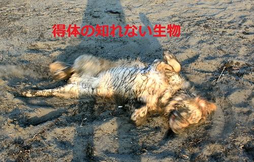 s-IMG_1287_20110519222407.jpg