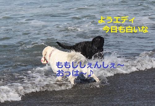 s-IMG_1318_20110807214600.jpg