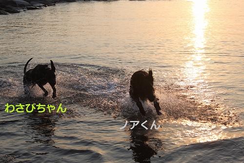 s-IMG_1334_20110519222652.jpg