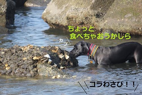 s-IMG_1366_20110810220446.jpg
