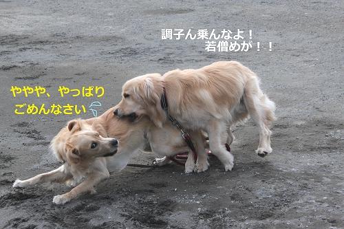 s-IMG_1603_20110601202908.jpg