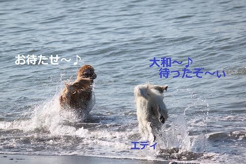 s-IMG_2091_20110916214728.jpg