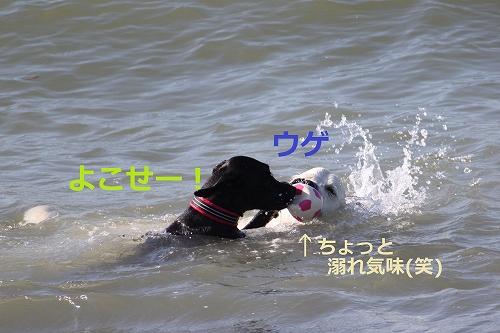 s-IMG_2099_20110916214847.jpg