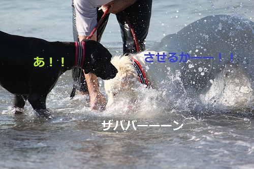 s-IMG_2101_20110916214846.jpg