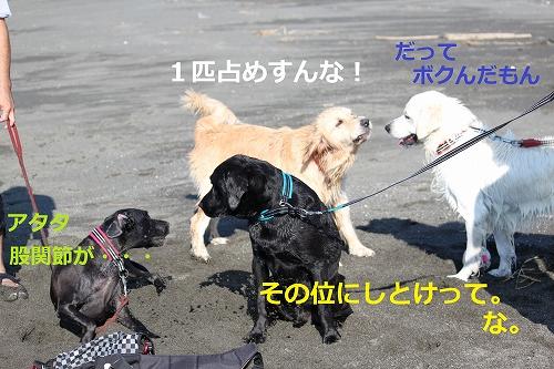 s-IMG_2117_20110916215025.jpg