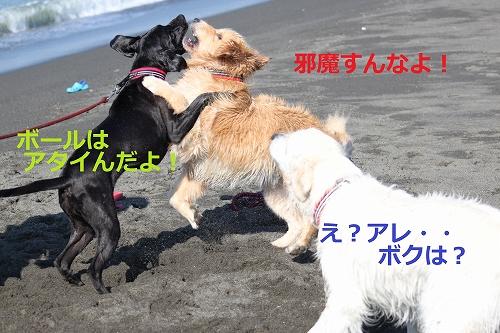 s-IMG_2130_20110916215121.jpg