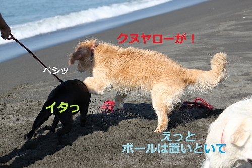 s-IMG_2131_20110916215120.jpg