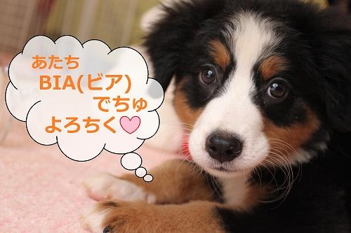 s-IMG_2189_20110917153933.jpg