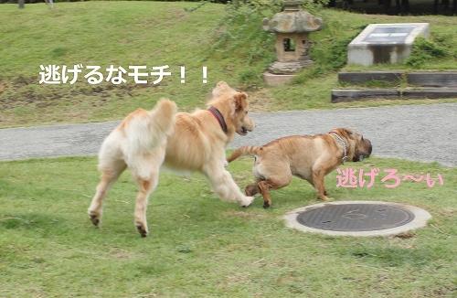 s-IMG_2272.jpg