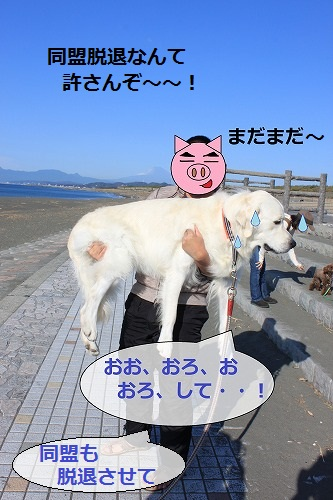 s-IMG_2409_20111007145505.jpg