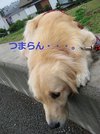 s-IMG_9785_20110602154205.jpg