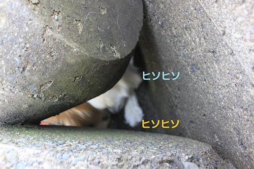 s-IMG_9813_20110603214612.jpg