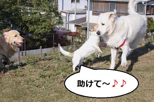 s-IMG_9945.jpg