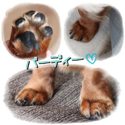 cats10040903.jpg