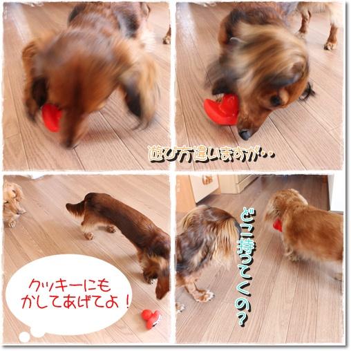 cats10050803.jpg