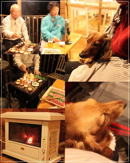 cats10110606.jpg
