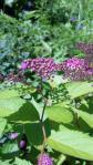 2010_0721_095931-DVC00191.jpg