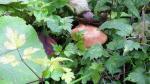 2010_1008_110738-DVC00107.jpg