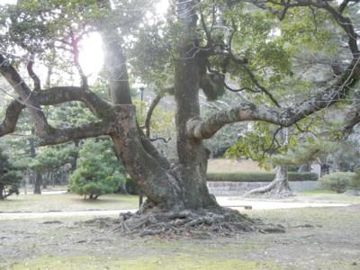 タブと言う名前の木