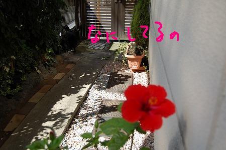 2DSC_0993.jpg