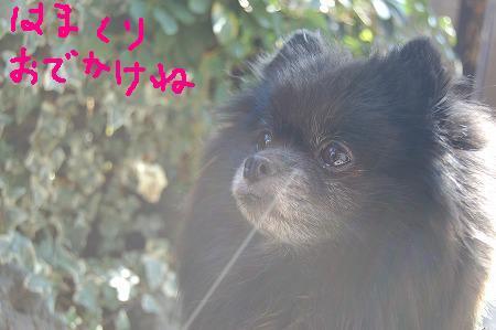 DSC_3681_20110212180759.jpg