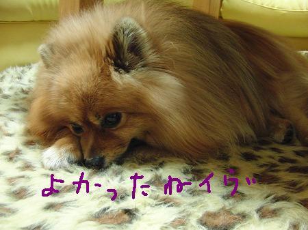 s-CIMG3046.jpg