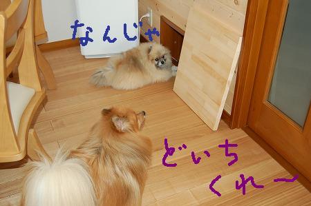 s-DSC_4598.jpg