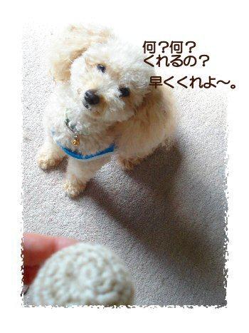編み物ボール1