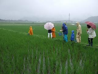 田んぼの生き物観察(7月4日)003