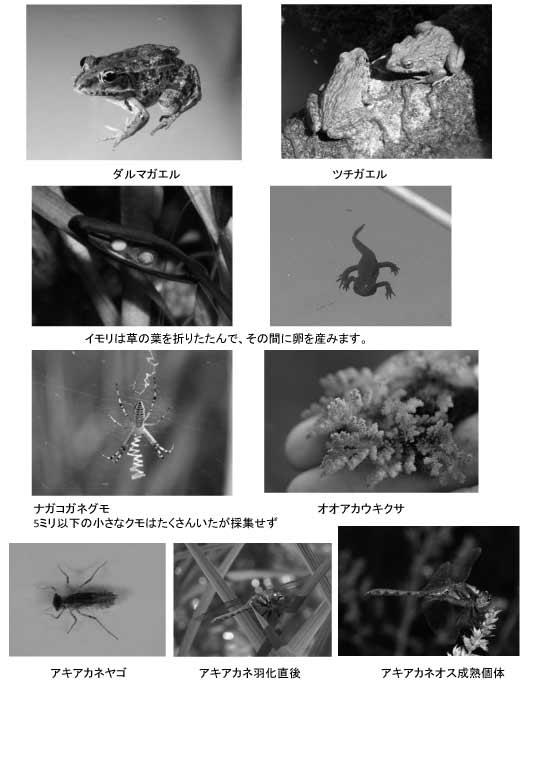 吉村田んぼの生き物たちweb用