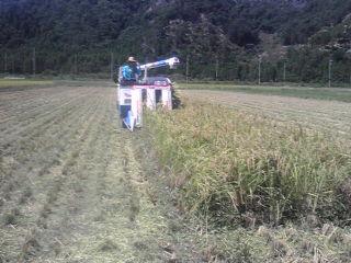 特別栽培刈取