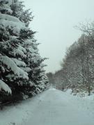 091226コロポックル山荘への道2